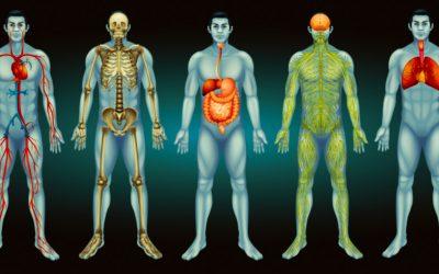 Fascia et systèmes corporels